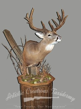 White Tail Deer Pedestal Mount - Artistic Creations Taxidermy
