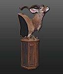 Greater Kudu Pedestal Mount