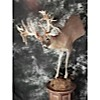 3/4 White Tail Pedestal Mount