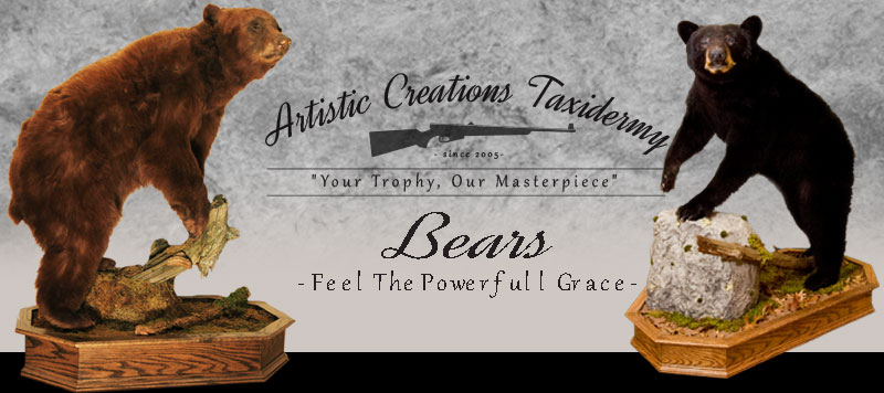 North American Bear Mounts by Artistic Creations Taxidermy
