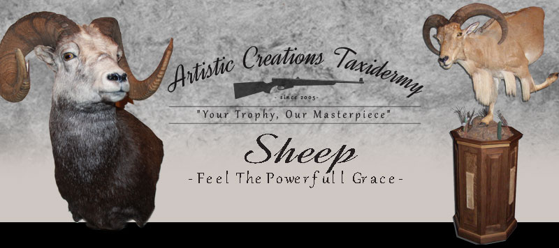 Ram Mounts by Artistic Creations Taxidermy